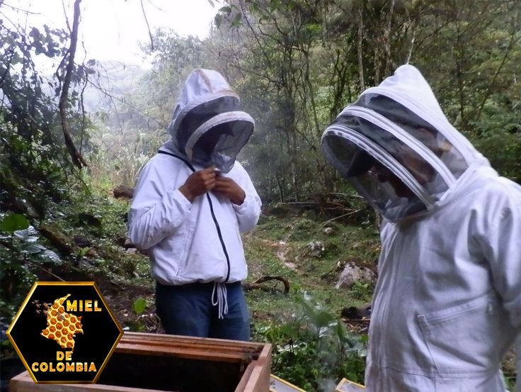El comportamiento de acicalamiento consiste en la habilidad de las abejas para remover ácaros de sus cuerpos usando sus patas y mandíbulas. Las abejas africanizadas de Sudamérica parecen defenderse mejor del ácaro varroa que las abejas de raza italiana