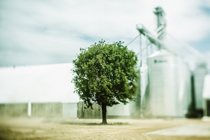 tree in the wind and alone / near to Ticino, Córdoba, Argentina