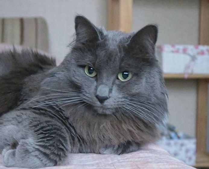 150 Best Grey Cat Names | Cats | Grey cat names, Cats, Cat names