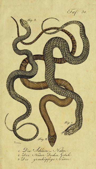 Snakes, Biology and Snake print on Pinterest