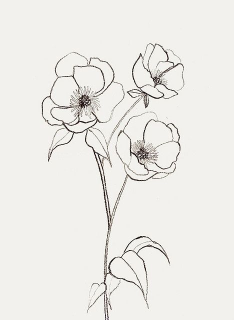 Red Flower Line Drawing : Best flower sketches ideas on pinterest