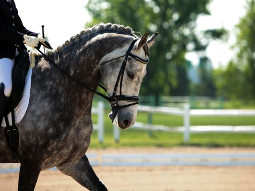 how to put on dressage bandages