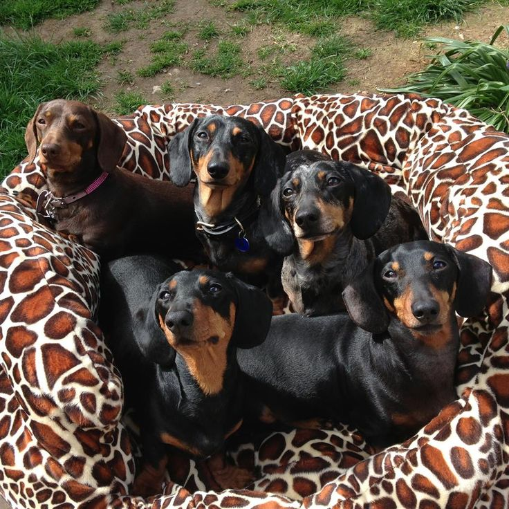 Group shot. doxie