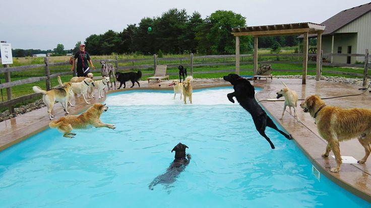 une journee dans la piscine pour chien lucky puppy 3   Piscine pour chiens [video]   soin plongeon piscine photo Lucky Puppy image GIF garde...