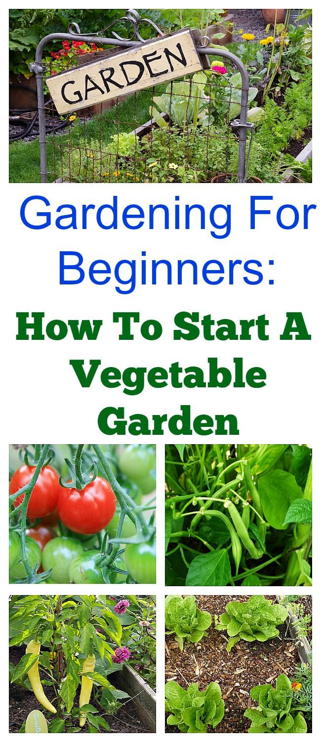 Would you like to have a vegetable garden this year? Here's a quick start guide to starting a spring vegetable garden that's great for beginners! If you would like more in-depth information about vegetable gardening, be sure to check out my Gardening 101 Series! #vegetablegarden #gardeningforbeginners #growingvegetables #gardeningtips