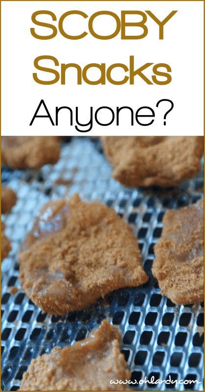 17 Best images about Kombucha on Pinterest | Bottle, Glass ... Kombucha Mushroom (scoby) And Starter Tea
