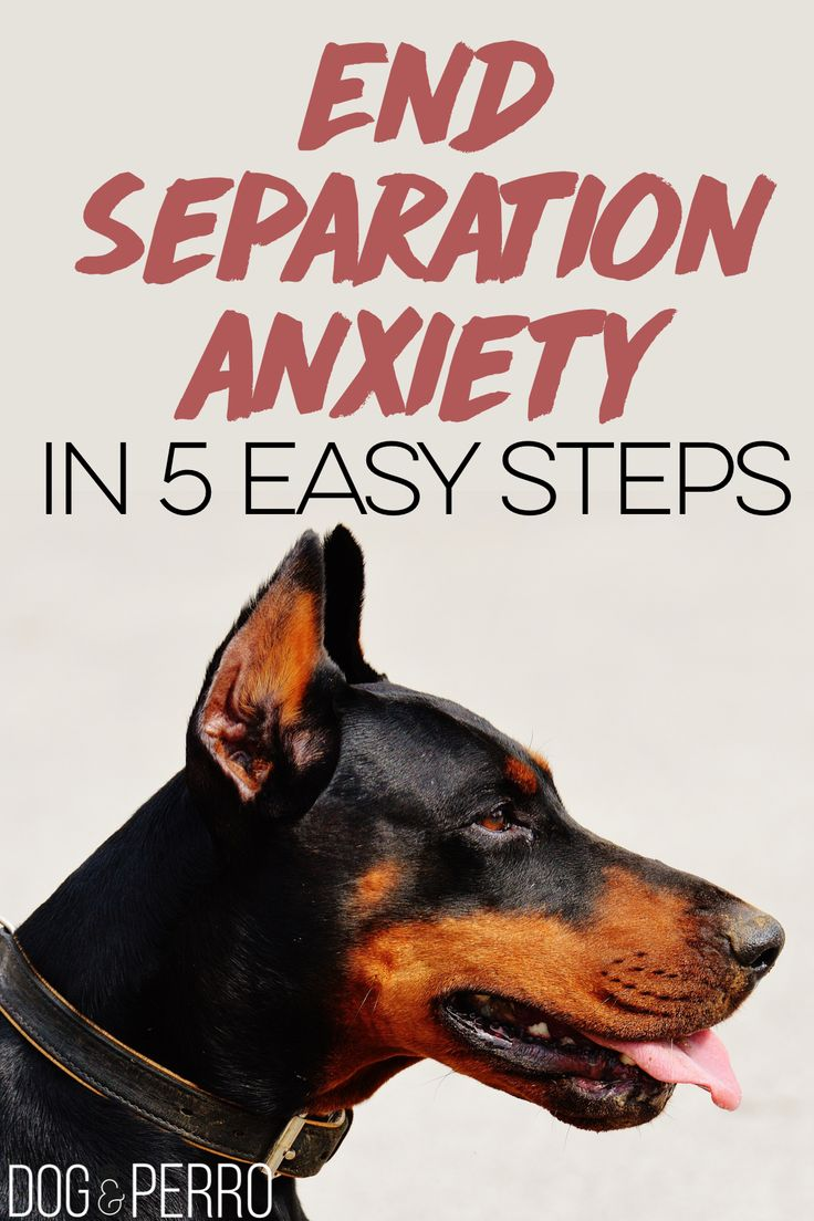 Is your dog experiencing separation anxiety? Are you coming home to a destroyed couch? This post is for you!