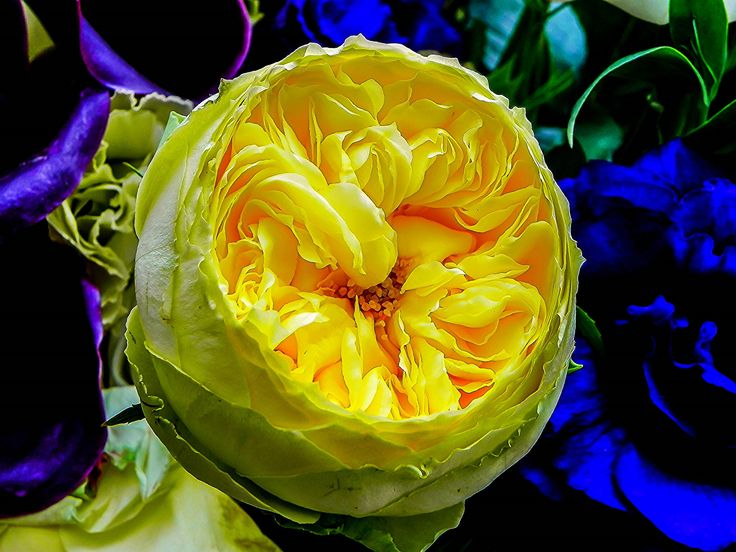 HDR Yellow Flower