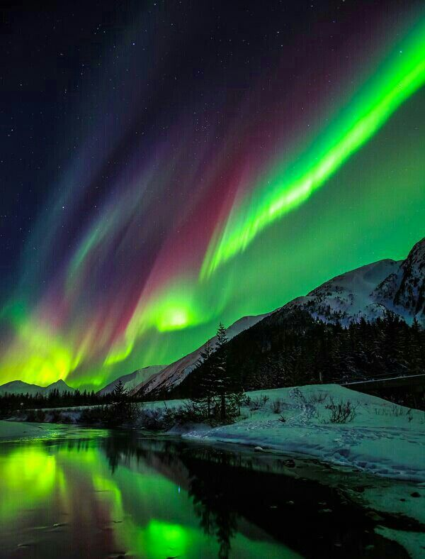 Aurora Borealis (Northern Lights) in Alaska! Photos only give you a small taste of what it's really like.