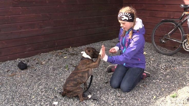 Lær deg hundespråk