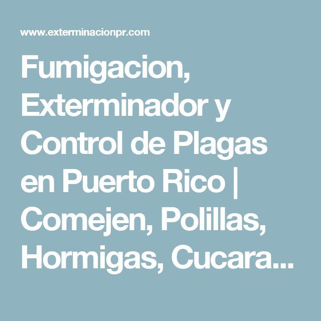 Fumigacion, Exterminador y Control de Plagas en Puerto Rico   Comejen, Polillas, Hormigas, Cucarachas, Garrapatas, pulgas