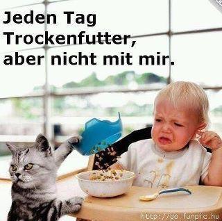Trockenfutter - Katzen Forum