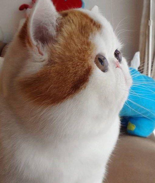 omg hahaha Meet Snoopy, the Newest Instagram Cat Sensation - PawNation