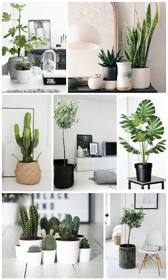 these are greet plants can be indoors