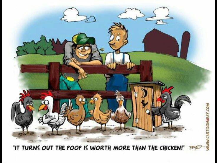 Chicken Humor Funny: Best 25+ Chicken Jokes Ideas On Pinterest