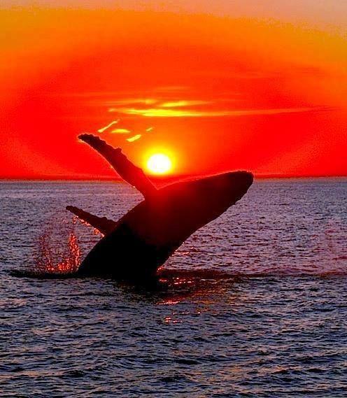 www.saveoceansnow.com