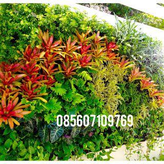 Mengenal Vertical Garden dan Cara Membuatnya  risaalam.Com - Vertical Garden atau Taman Vertikal memiliki beberapa nama diantaranya Green Wa...