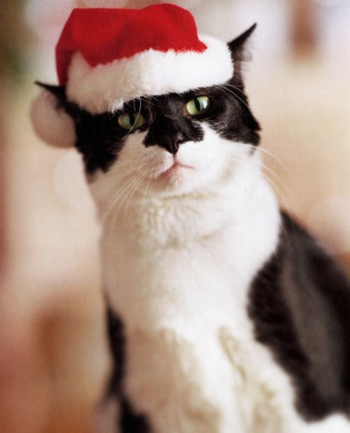 Tux made a surprise appearance as Santa;  we all knew it was him.