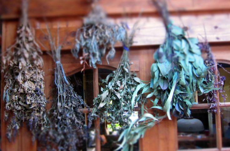 Puedes tener tus propias plantas medicinales para crear infusiones