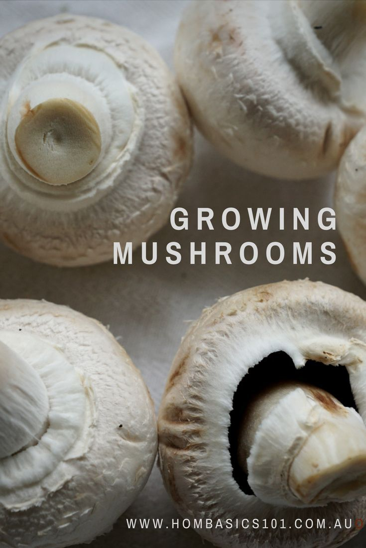 Growing Mushrooms  I don�t know why but growing mushrooms has always been something I thought I couldn�t do.  I had it in my head that it�d be too hard, the climate would be too difficult to maintain and I�d never be able to find the right spot to grow th