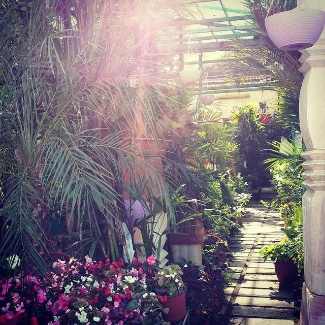 The secret garden... #garden #nature #flowers #greenhouse #Amman #Jordan #ShareYourJordan