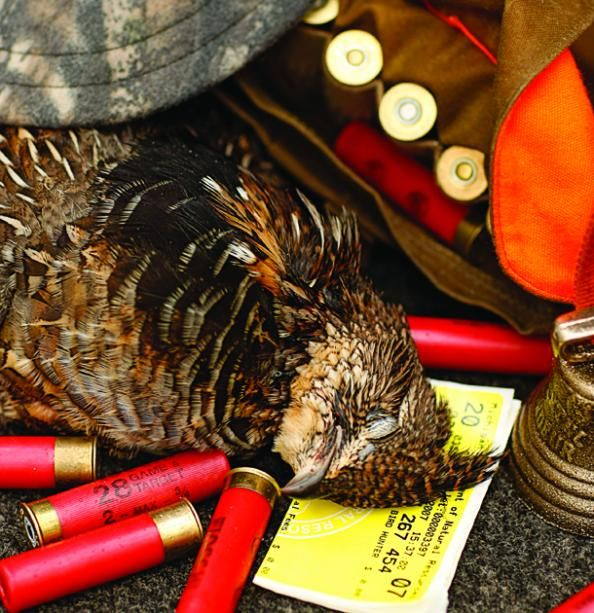 Grouse Hunting Tips: 6 Ways to Get More Early-Season Birds