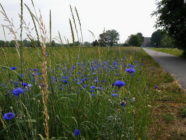 4frommi | FLOWERS IN UNUSUAL PLACES (Veronica Arrigoni, Maria ...