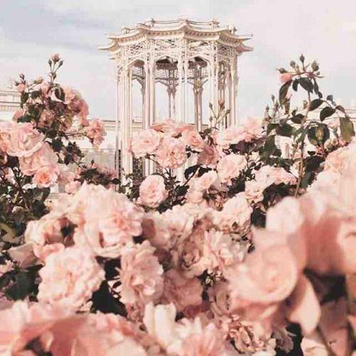 #flowers power