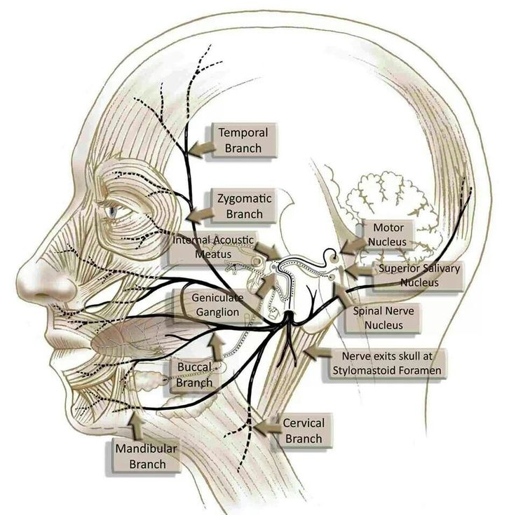 149 best Trigeminal Neuralgia And TMJ images on Pinterest | Chronic ...