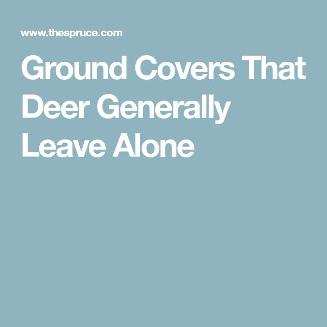 Ground Covers That Deer Generally Leave Alone