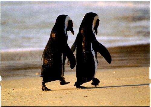 CouplePenguins Love, Best Friends, Soul Mates, Adorable, Beach, Things, Smile, Holding Hands, Animal