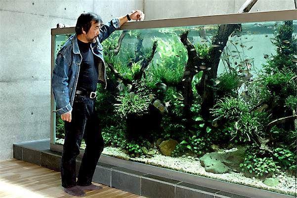 De 3 geheimen van Takashi Amano voor een schitterend aquarium