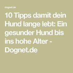 10 Tipps damit dein Hund lange lebt: Ein gesunder Hund bis ins hohe Alter - Dognet.de
