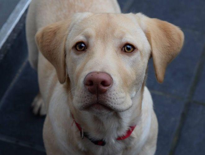 Quelles sont les qualités pour bien éduquer son chien ? Découvrez-les ici ==> http://fr.yummypets.com/wellbeing/article/51873-les-qualites-pour-bien-eduquer-son-chien #chien #comportement #education #chiot #conseil