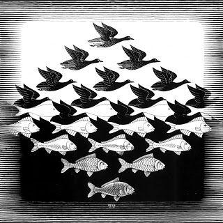 ¿aves o peces?