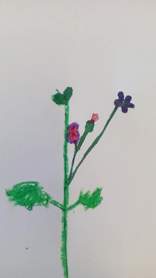 benodigdheden: kroontjespen, ecoline, vetkrijt en echte bloemen. De kinderen tekenen hun echte bloem na. Dit is groep 5!