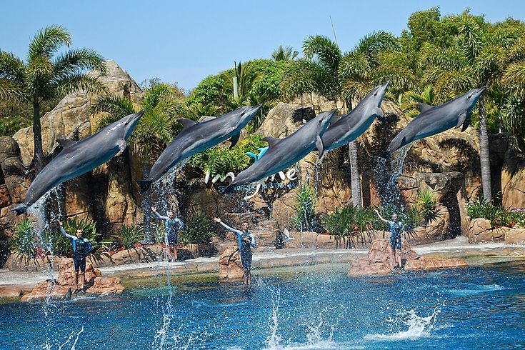 sea world gold coast - Google Search