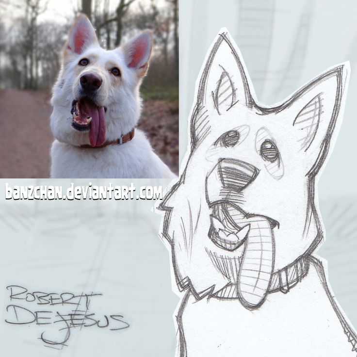 Mezdogg+Sketch+by+Banzchan.deviantart.com+on+@DeviantArt