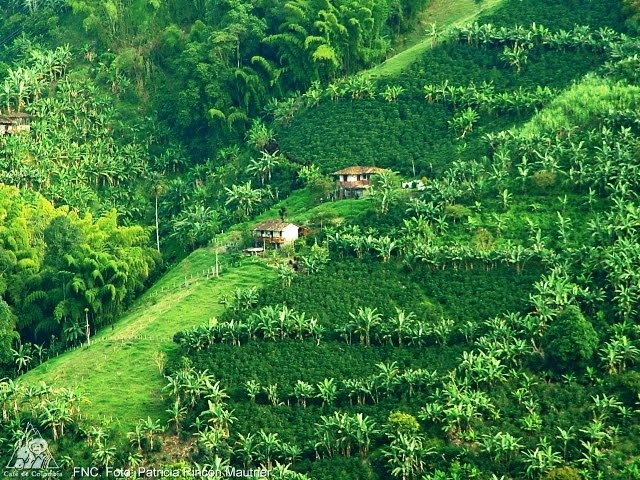 The Coffee Cultural Landscape of Colombia