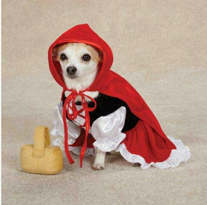 Collection Small Dog Halloween Costumes Pictures. Top 20 Best Cute ...