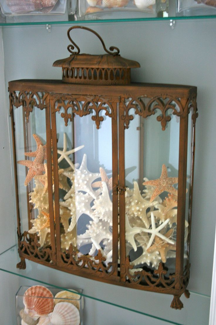 Starfish display. <3