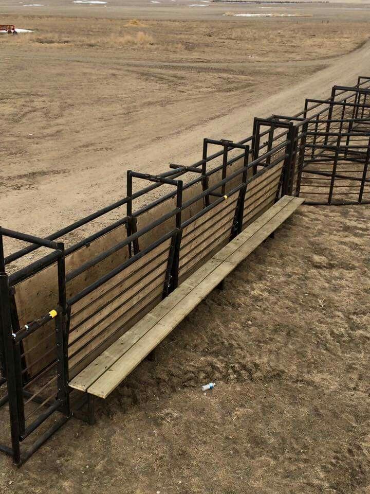 73 Best Cattle Corral Images On Pinterest Livestock