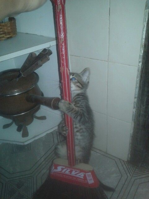 O gato escalador de vassouras