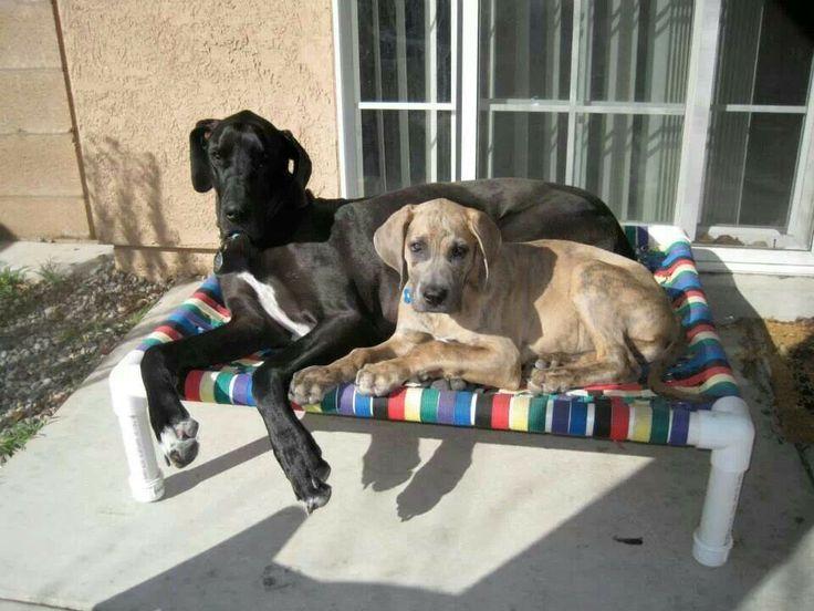 Cama para perros tubos pvc tatoyos pinterest for Cama para perros