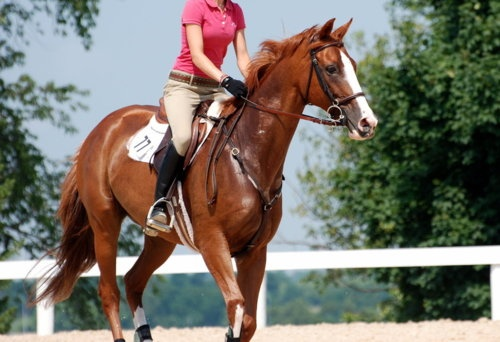 Delaney would love riding lessons when she is a couple of years older