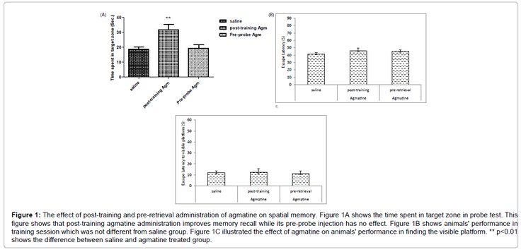 Agmatine Improves Spatial Memory Consolidation: The Role of Nitric Oxide