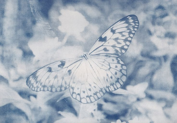 Butterfly, Gran Canaria 2011 #butterfly #cyanotypes #nature #photography #grancanaria #alternativeprocess