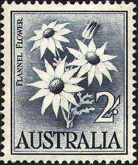 Australian Flannel Flower (Actinotus helianthi) vintage Stamp 1959 by Margaret Stones