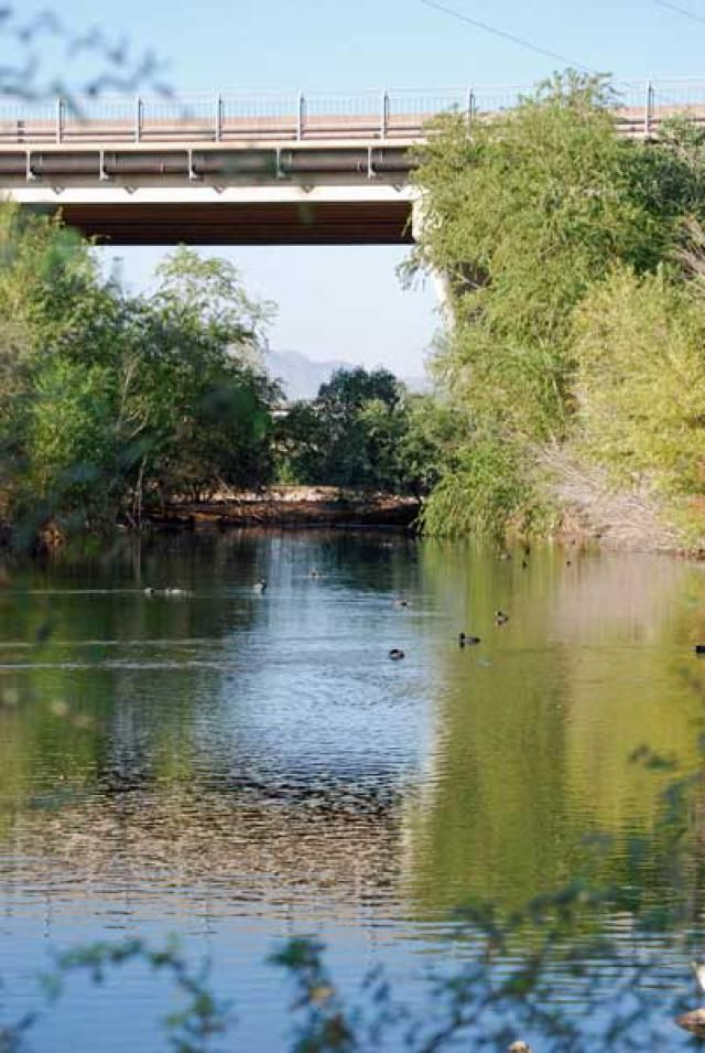 Find out about the Rio Salado Habitat Restoration Area in Phoenix. The Rio Salado Habitat Restoration Area is a riparian area, and offers hikes, classes and birdwatching.: What is the Rio Salado Habitat Restoration Area?What Can People Do Here?Birding at Rio SaladoPark RulesLocation, Fees and Schedule