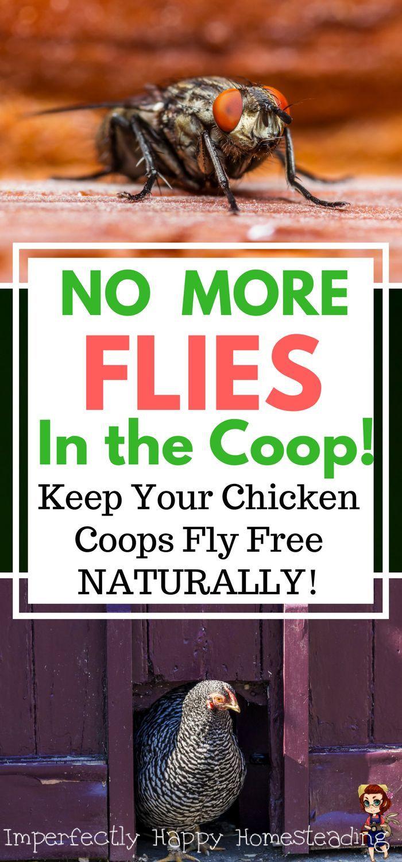 2206 best genius chicken coop plans for backyard chickens quail